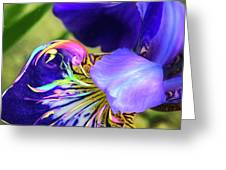 Iris Osirus Greeting Card by Cindy Greenstein