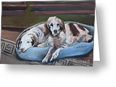 Irish Red And White Setters - Archer Dogs Greeting Card