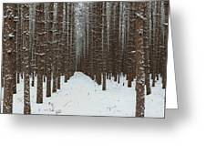 January Forest Greeting Card