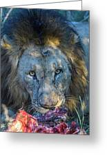 Jungle King With Kill With Killer Looks Greeting Card