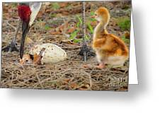 Just Hatching Greeting Card
