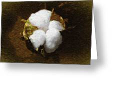 King Cotton Greeting Card by Barry Jones