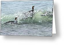 King Penguins Swimming In The Waves Greeting Card by Alan M Hunt