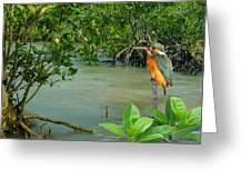 Kingfisher In The Mangroves Greeting Card