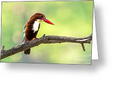 Kingfisher On The Lookout Greeting Card