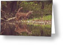 Kissing Deer Reflection Greeting Card