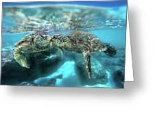 Kissing Turtle Greeting Card