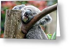 Koala Catching Zs Greeting Card