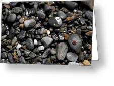 Beach Bug  Greeting Card