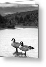 Lake Cuyamaca Geese Greeting Card