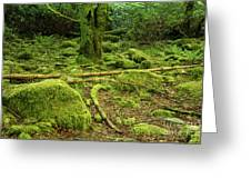 Landscape At Torc Waterfalls Greeting Card