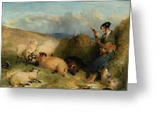 Lassie Herding Sheep Greeting Card