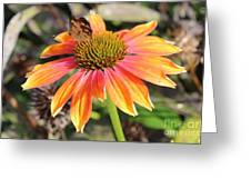 Last Cone Flower Greeting Card