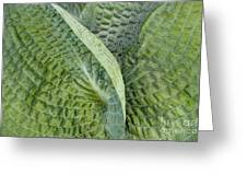 Laughing Leaves Greeting Card