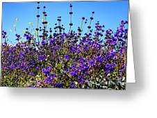 Lavender Blooms  Greeting Card