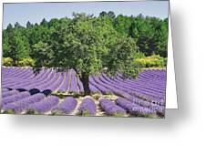 Lavender Field And Tree Greeting Card