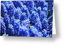 Lavender Field With Bee Greeting Card