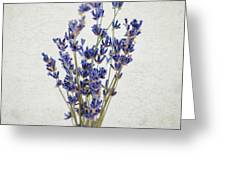 Lavender Greeting Card by Nicole Young