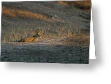 Lc12 Greeting Card by Joshua Able's Wildlife