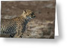 LC5 Greeting Card by Joshua Able's Wildlife