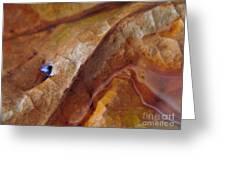 Leaf Series 1 Greeting Card