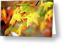 Leaf Therapy Greeting Card