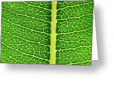 Leaf Veins Greeting Card by Jeff Phillippi