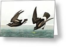 Least Stormy Petrel, Thalassidroma Pelagica By Audubon Greeting Card