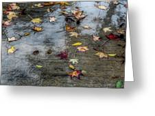 Leaves In The Rain Greeting Card by Alison Frank
