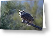 Life's A Hoot Greeting Card