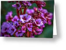 Lilac #h9 Greeting Card