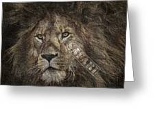 Lion Safari Greeting Card