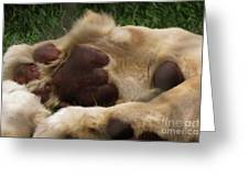 Lion's Feet Greeting Card