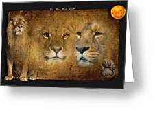 Lions No 02 Greeting Card