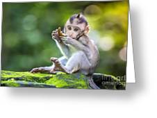 Little Baby-monkey In Monkey Forest Of Greeting Card