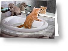 Little Kittens Bathing In The Sink Greeting Card