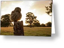 Little Owl Sunset Greeting Card