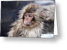 Little Snow Monkey At The Jigokudani Greeting Card