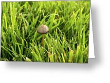 Lonely Little Mushroom Floating On The Grass Greeting Card