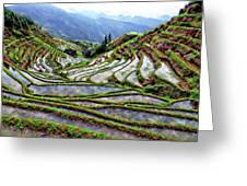 Lonji Rice Terraces Greeting Card