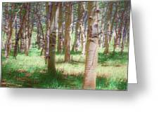 Lost In The Woods - Kenosha Pass, Colorado Greeting Card