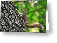 Lost Nuts Greeting Card