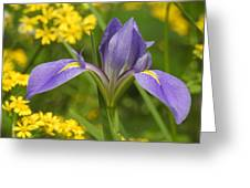 Louisiana Iris Greeting Card