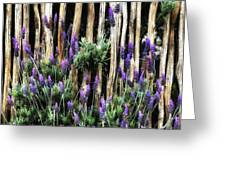 Love Of Lavender Greeting Card
