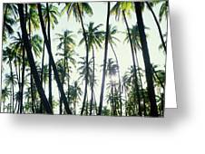 Low Angle View Of Coconut Palm Trees Greeting Card