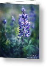 Lupine Blues Greeting Card