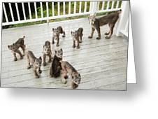Lynx Family Portrait 11x14 Greeting Card by Tim Newton