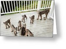 Lynx Family Portrait Greeting Card by Tim Newton