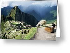 Machu Picchu And Llamas Greeting Card