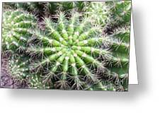Macro Of Succulent Plant In The Desert Greeting Card